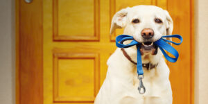 Dog Walking: Safety Etiquette and Best Practice